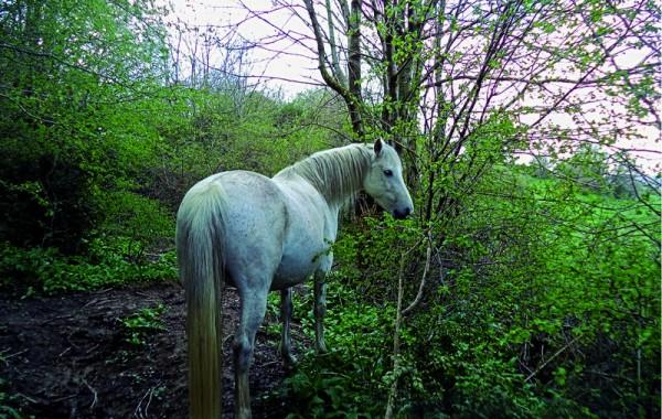 Cavalls 2