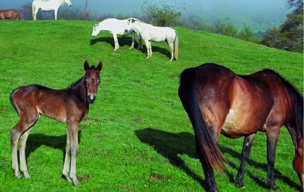 Cavalls 3