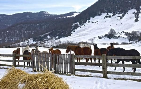 Cavalls 4