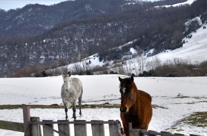 Cavalls 5
