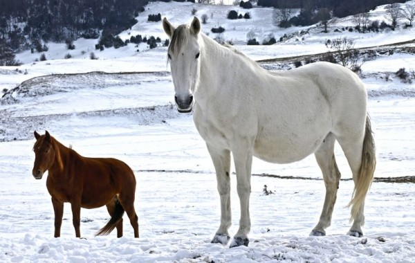 Cavalls 6
