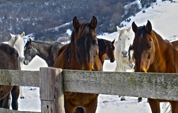 Cavalls 9