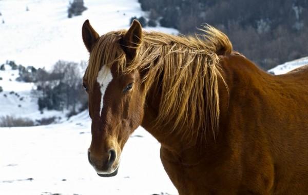 Cavalls 10