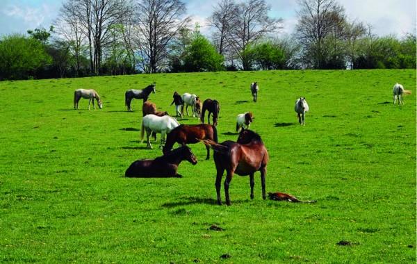 Cavalls 11
