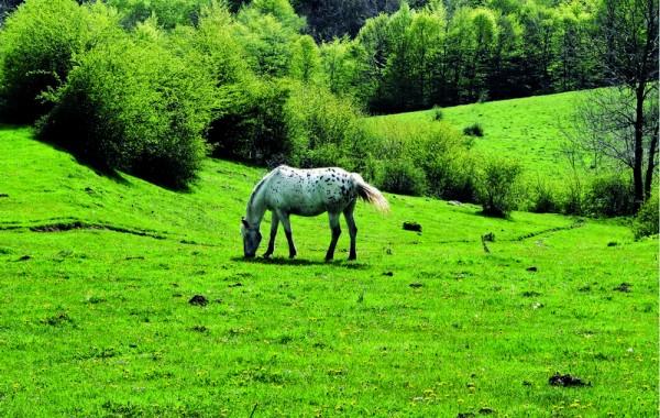 Cavalls 12