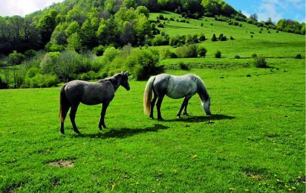 Cavalls 14
