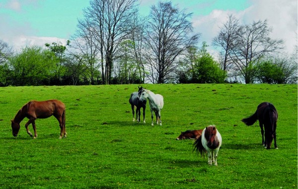 Cavalls 15