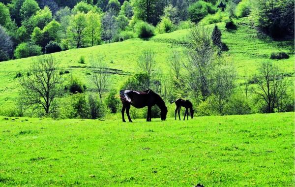 Cavalls 16