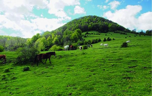 Cavalls 17