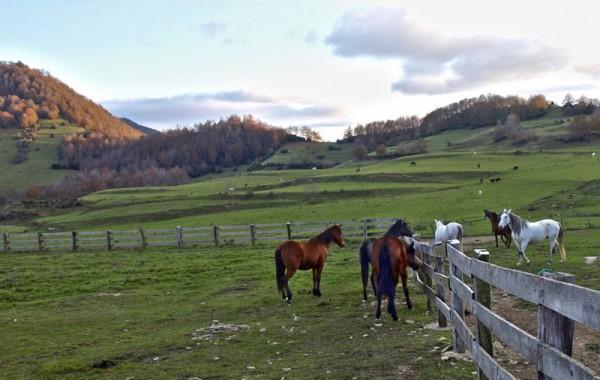 Cavalls 18