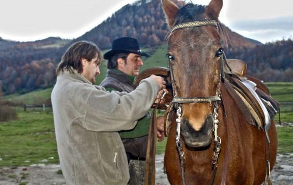 Equitació 7