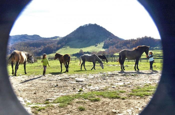Equitació 9