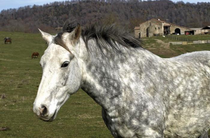 Cavalls 20