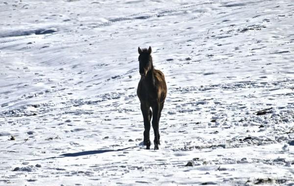 Cavalls 21