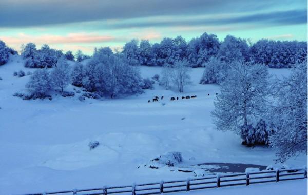 Paisatge d'hivern 6